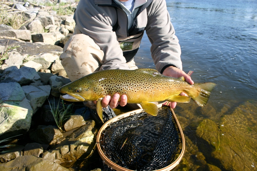 Bow River Trout Spring 2017 Newsletter