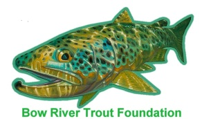 Brown Trout cut out 2
