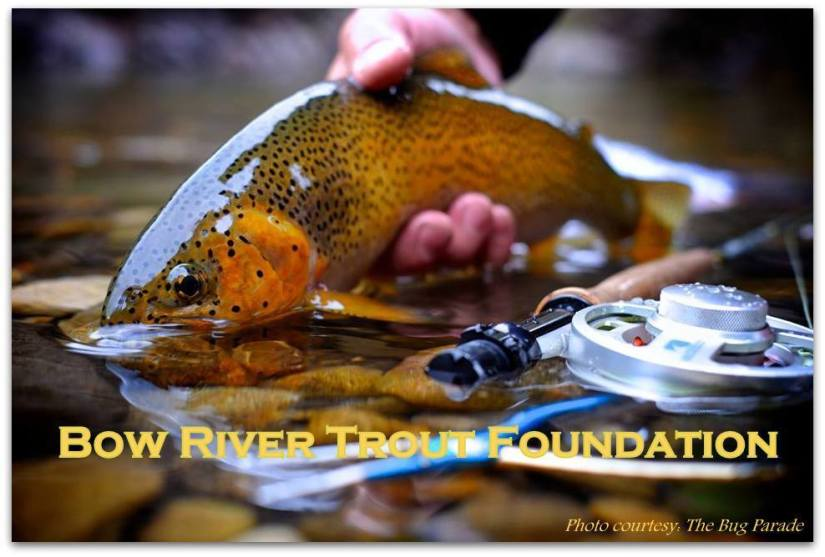 Join Bow River Trout – Support the Bow River Fishery