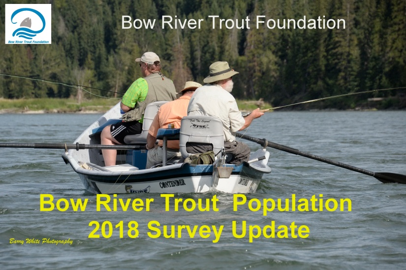 Bow River Trout Population – 2018 Survey Update